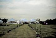 Marquee Summer Field